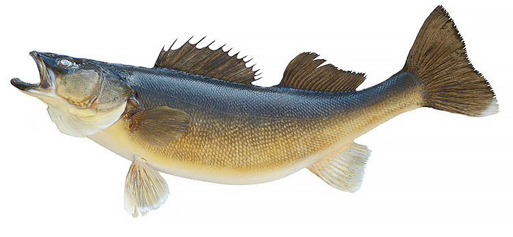 Ontario Walleye Fishing
